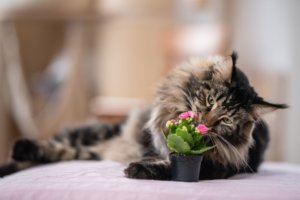 Substances Unsafe for Cats