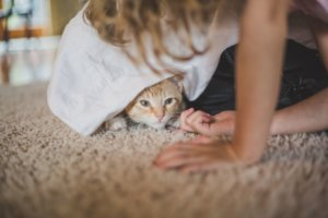 Is Your Cat Scared of People?
