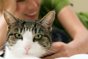 Why Cats Blink Their Eyes at You