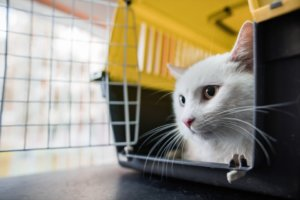 Low Stress Travel to the Vet With Your Cat