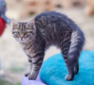 """Is """"Rippling Skin"""" an Anxiety Disorder in Cats?"""
