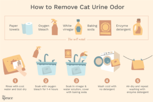 How to Remove Cat Urine Odor From Clothes and Bedding