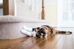 How to Stop Destructive Scratching in Cats