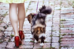 How to Train Your Cat to Walk on a Leash