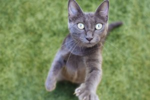 Cat Aggression or Hyperesthesia