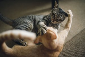 How to Stop Aggression Between Cats