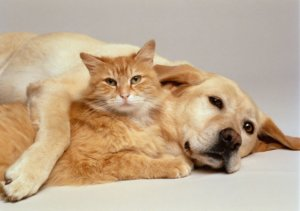 Can You Use Dog Flea Control on a Cat?