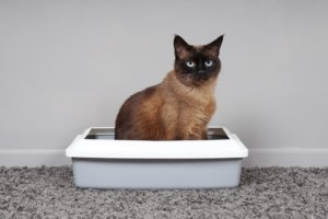 How to Solve Common Litter Box Problems in Cats