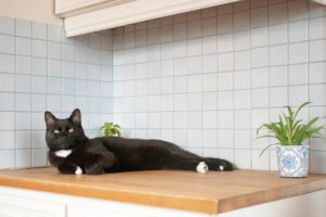 How to Stop Your Cat From Jumping on the Kitchen Counters