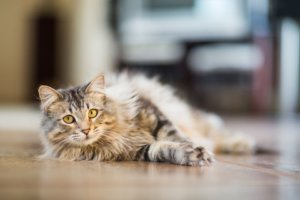 What Is Scruffing in Cats?