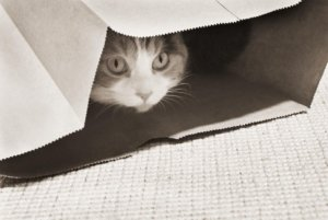 Training Your Fearful Cat to Be Confident