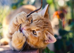 How to Stop Destructive Chewing in Cats