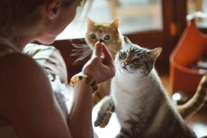 Human Foods That Are Toxic for Cats