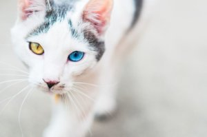 Domestic Mixed-Breed Cat (Moggie): Cat Breed Profile