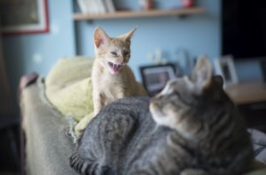 How to Solve Aggression Between Household Cats