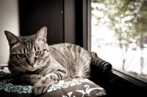 Causes and Signs of Arthritis in Cats