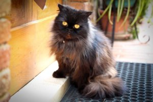 Senior Cat Health: When Is it Time to See the Vet?