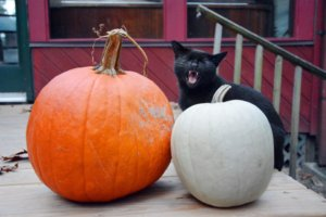 Myths and Superstitions About Black Cats
