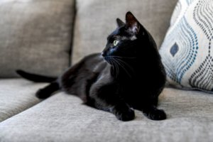5 Pawsitively Fascinating Facts About Black Cats