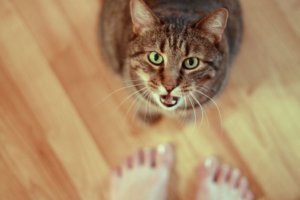 How to Identify and Solve Attention-Seeking Behavior in Cats