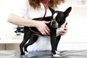 How to Prepare Financially for Sick Pet Visits