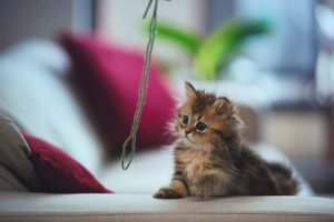 Why Yarn Is Not a Safe Toy for Cats