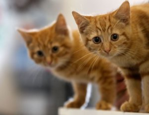 Roundworms in Cats