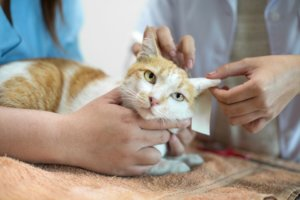 Neurological Disorders in Cats