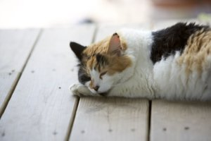 Help Your Cat Beat the Heat