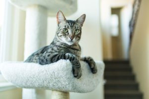 All About Tabby Cats and Their Color Patterns
