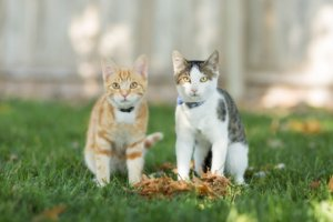 How to Treat Ringworm in Cats