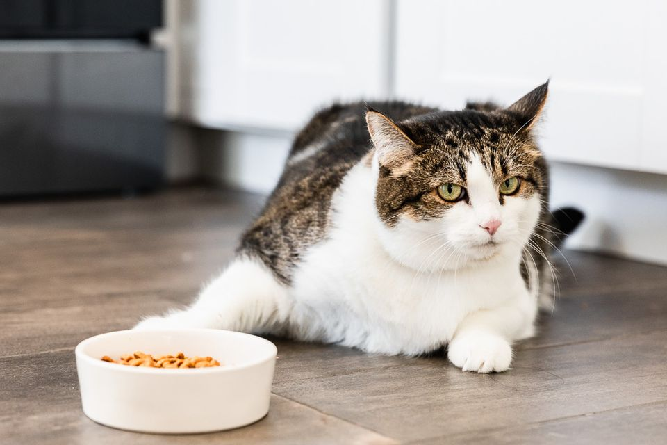 8 Reasons Why Your Cat Is Not Eating