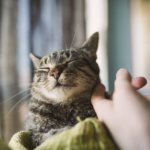 7 Places Where Cats Like to Be Pet